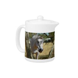 Snow White The Horse,_