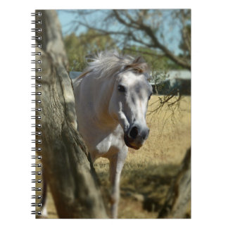 Snow White The Horse,_ Note Books
