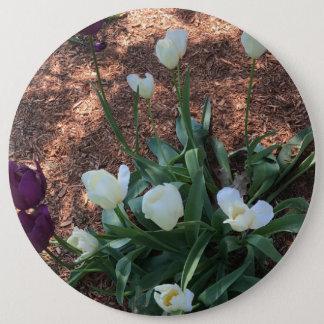 Snow white tulip type flowers in a garden 6 inch round button