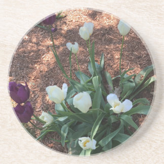 Snow white tulip type flowers in a garden coaster