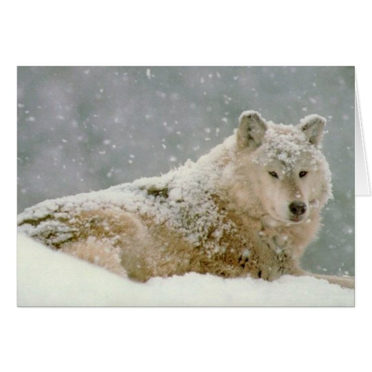 Snow wolf card
