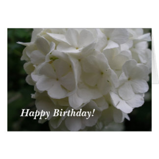 Snowball Bush Birthday Card