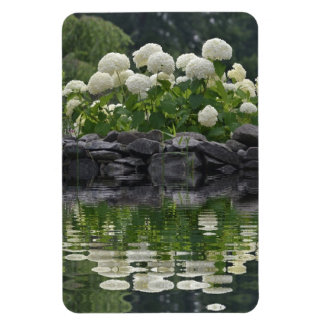 Snowball Hydrangea With Reflections Magnet