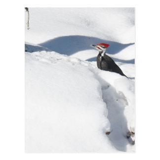 Snowbird.JPG Postcard
