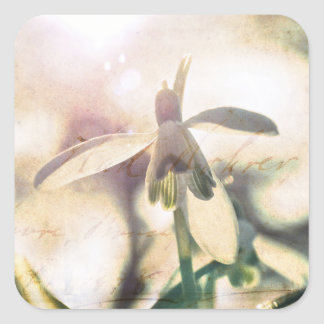 Snowdrop lyrical 2.01q square sticker