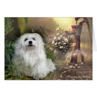 Snowdrop the Maltese Blank Greeting Card