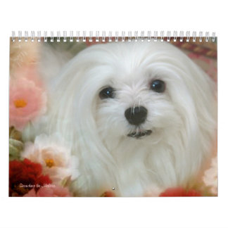 Snowdrop the Maltese Calendar