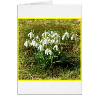 Snowdrops 02.2 (Schneegloeckchen) Card