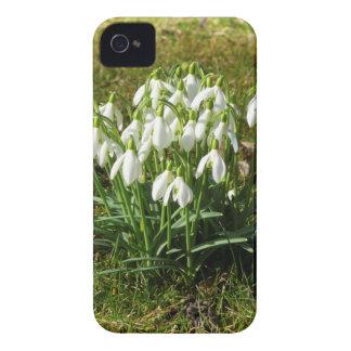 Snowdrops 02.2 (Schneegloeckchen) Case-Mate iPhone 4 Case