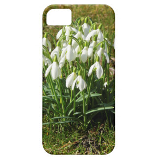 Snowdrops 02.2 (Schneegloeckchen) iPhone 5 Case