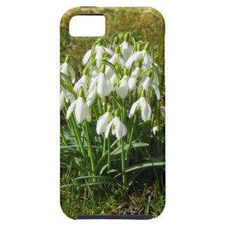 Snowdrops 02.2 (Schneegloeckchen) iPhone 5 Cover