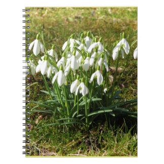 Snowdrops 02.2 (Schneegloeckchen) Notebook