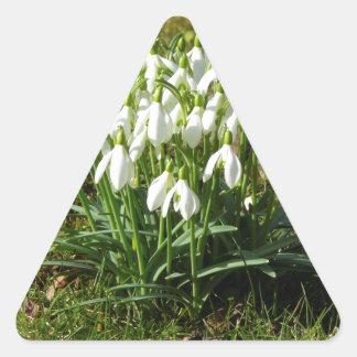 Snowdrops 02.2 (Schneegloeckchen) Triangle Sticker