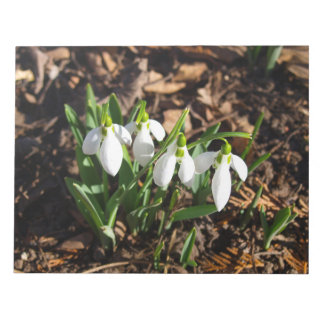 Snowdrops in the sunshine notepad