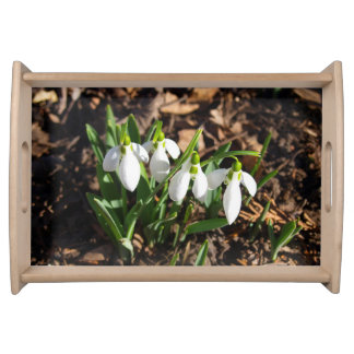 Snowdrops in the sunshine serving tray