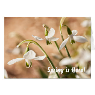Snowdrops | Personalized Note/Greeting Card