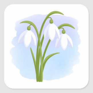 Snowdrops - Spring Flowers on Watercolor Blue Square Sticker