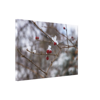 Snowed Berries Canvas Print
