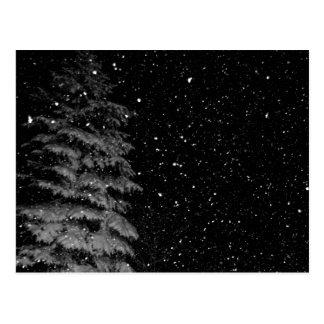 snowflakes at night  unique photograph postcard