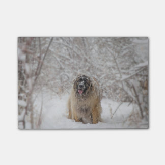 snowy Berger Post-it Notes