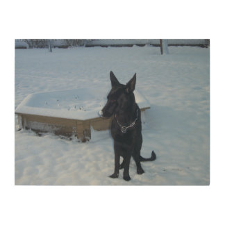 Snowy Black German Shepherd Wood Prints