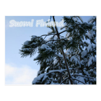 Snowy Branches Postcard