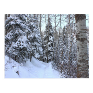 Snowy Canadian Forest Postcard