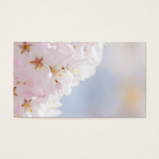 Snowy Cherry Blossoms Business Card