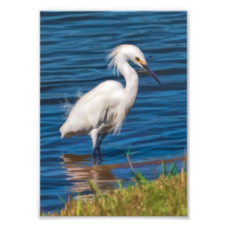 Snowy Egret at the Pond Photograph
