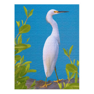 Snowy Egret at the Pond Postcard