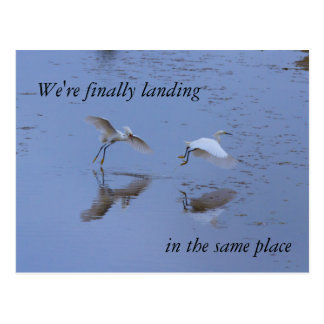 Snowy Egret Heron Moving in Together New Address Postcard