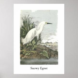 Snowy Egret, John Audubon Print