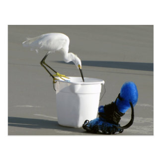 Snowy Egret on a Bait Bucket Postcard