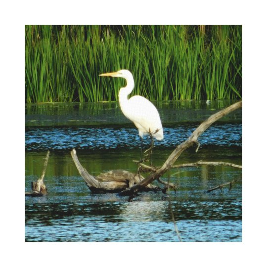 Snowy Egret on Log Canvas Print