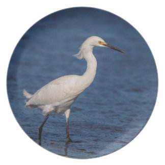 Snowy Egret on North Beach Plate