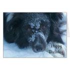 Snowy Faced Border Collie Cute Birthday Card