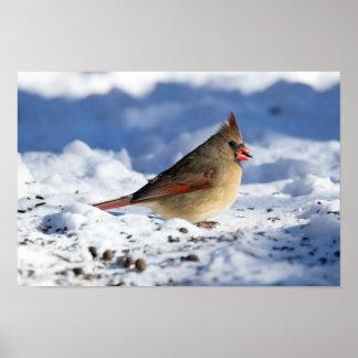 Snowy Female Cardinal Poster