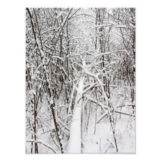 Snowy Forest 13 Photo Print