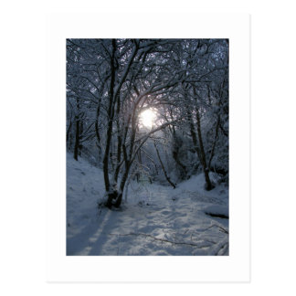 Snowy Forest Trail Postcard