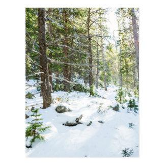 Snowy Forest Wilderness Playground Postcard