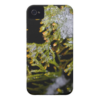 snowy leaves iPhone 4 Case-Mate cases