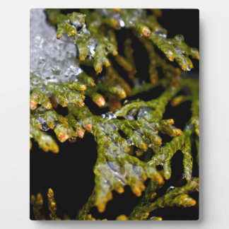 snowy leaves plaque