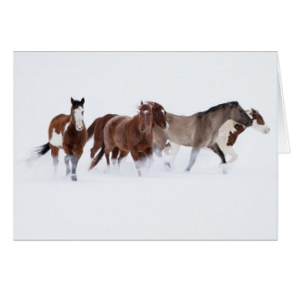 Snowy March II Horse Greeting Card