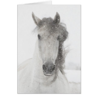 Snowy Mare - Horse Greeting Card