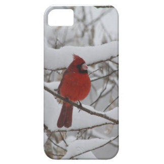 Snowy Nose Cardinal Iphone 5 case-mate