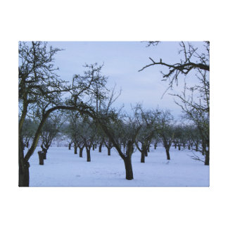 Snowy Orchard, Cheddington,Buckinghamshire Canvas Print