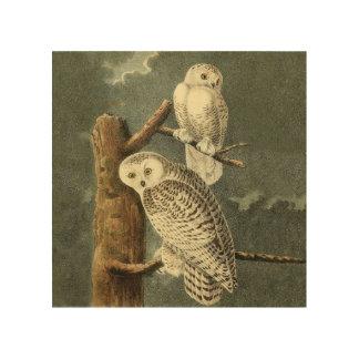 Snowy Owl Audubon Bird Art Illustration Artwork