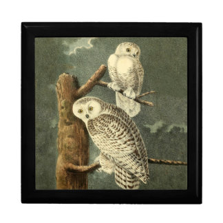 Snowy Owl Audubon Bird Art Illustration Artwork Gift Box