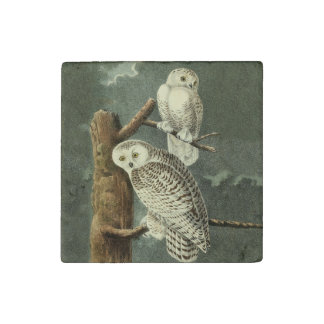 Snowy Owl Audubon Bird Art Illustration Artwork Stone Magnets