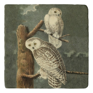 Snowy Owl Audubon Bird Art Illustration Artwork Trivet